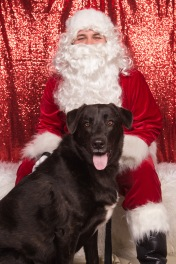 PetValu-PPPH-Holiday2017-web-4238