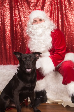 PetValu-PPPH-Holiday2017-web-4244