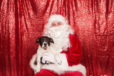 PetValu-PPPH-Holiday2017-web-4314