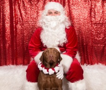 PetValu-PPPH-Holiday2017-web-4324