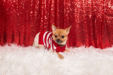 PetValu-PPPH-Holiday2017-web-4380
