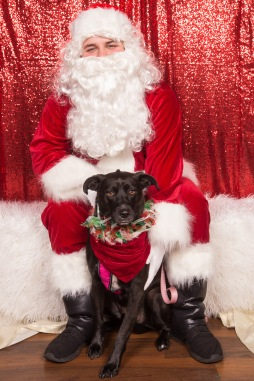 PetValu-PPPH-Holiday2017-web-4412
