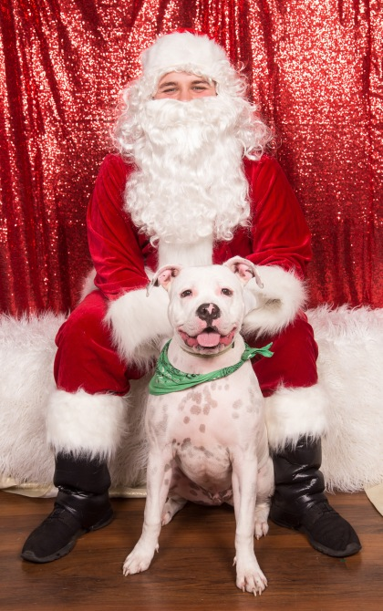 PetValu-PPPH-Holiday2017-web-4472