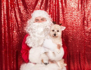 PetValu-PPPH-Holiday2017-web-4482