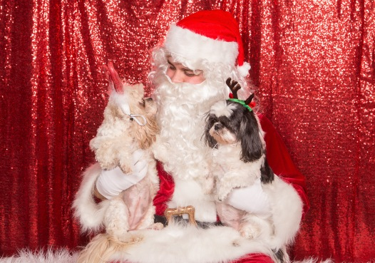 PetValu-PPPH-Holiday2017-web-4489