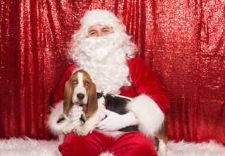 PetValu-PPPH-Holiday2017-web-4499