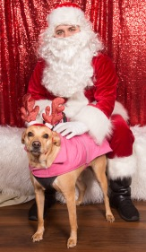 PetValu-PPPH-Holiday2017-web-4504
