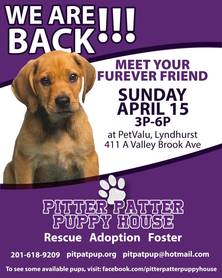 Adoption-2018-04-07